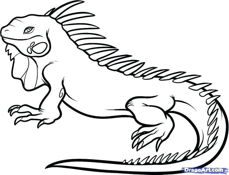 Iguana Coloring Pages Iguana Coloring Page Coloring Pages