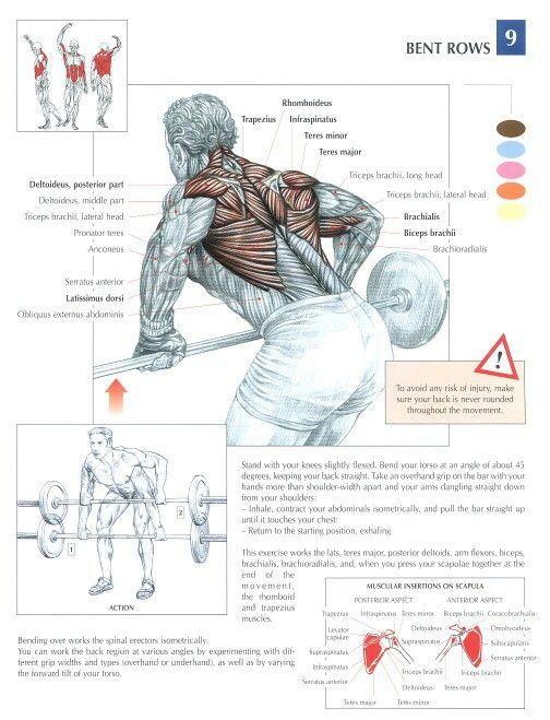Pin de Arturo Bustamante en Body | Entrenamiento espalda