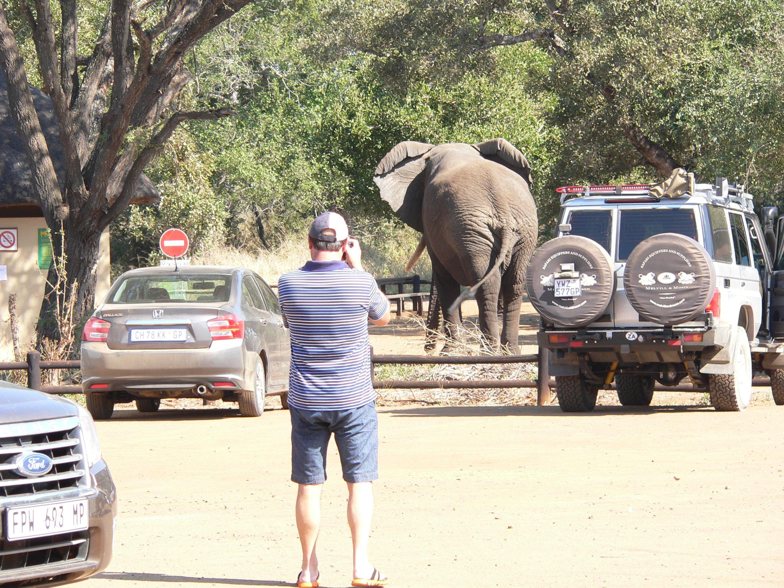 Konsternasie by Tshokwane piekniekplek in Kruger Wildtuin, toe die olifant rustig daar begin wei het