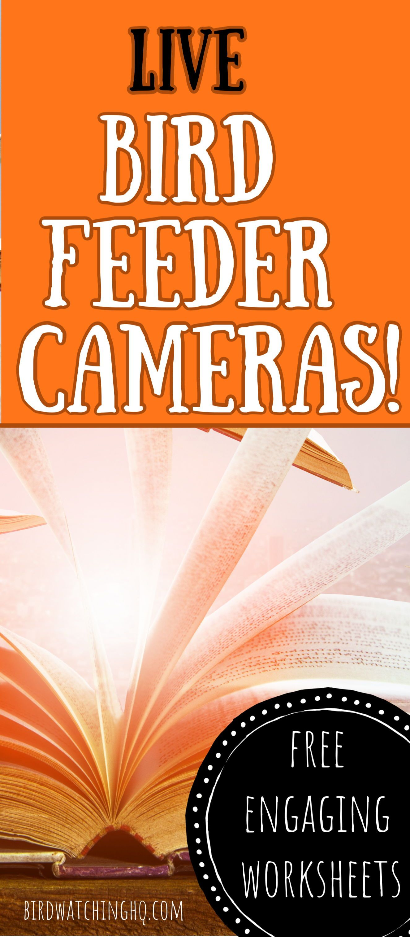 Worksheets To Use With The Live Animal Cameras