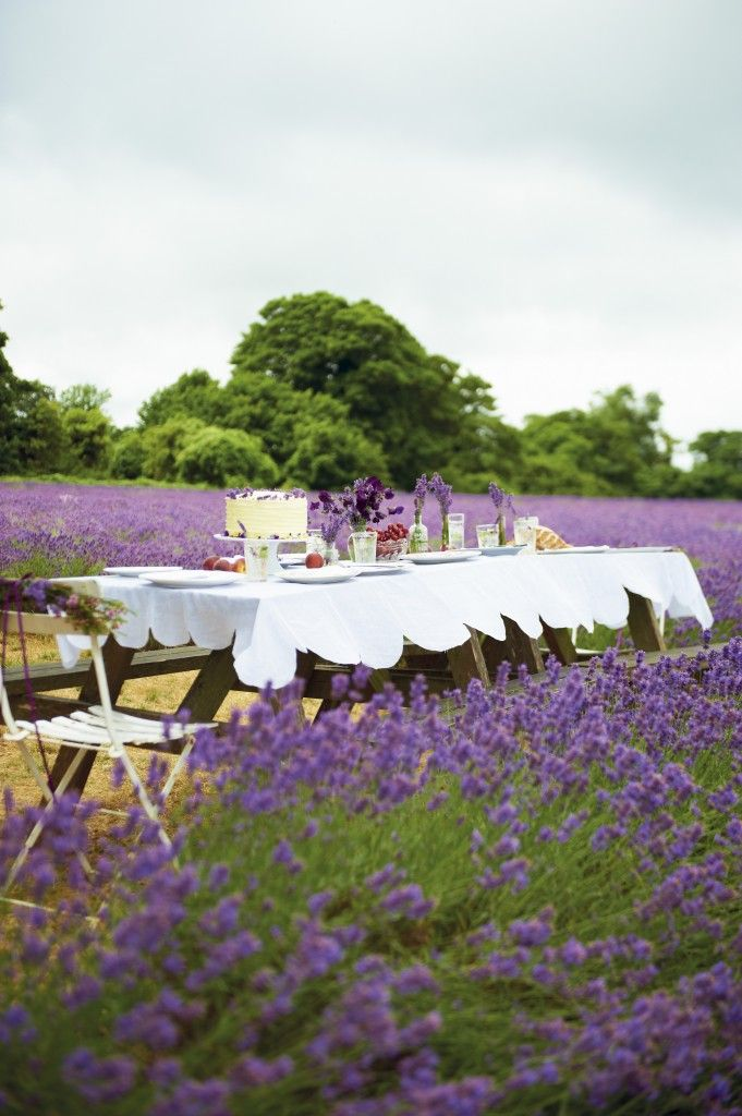 Dining in the lavender fields