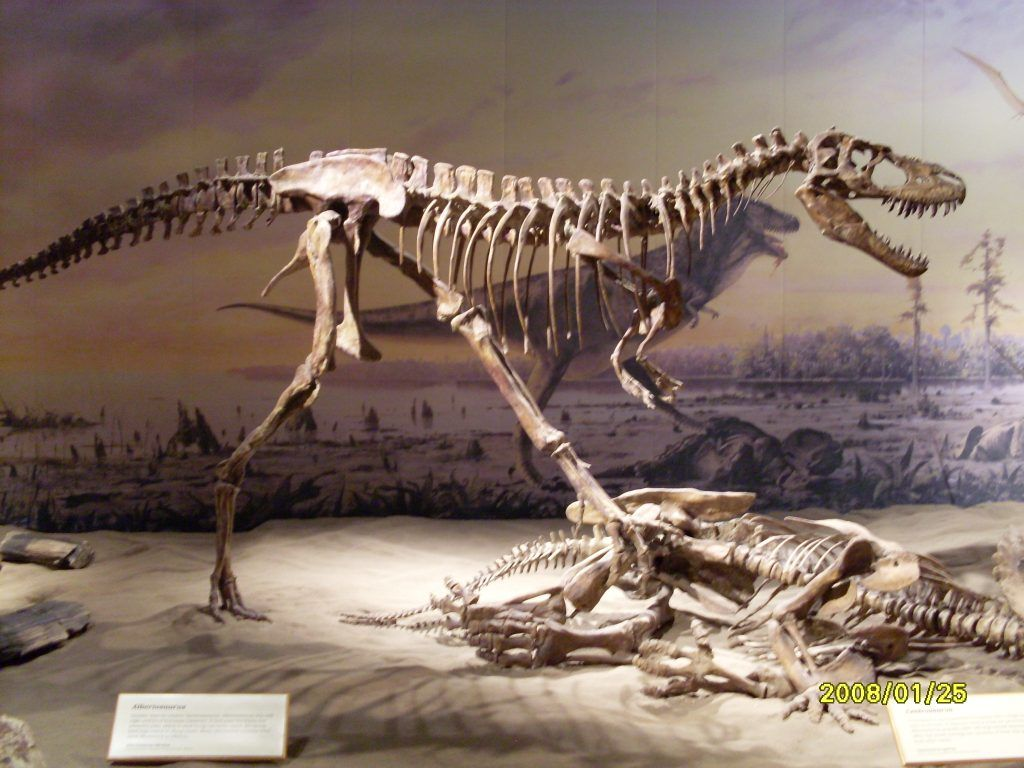 Albertosaurus El Gran Cazador Dinosaur Wonderopolis Dinosaurs Extinction