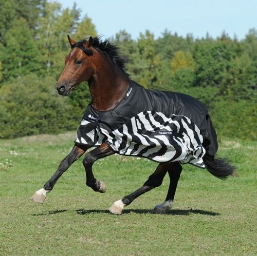 Bucas Buzz Off Zebra Rain Rug The Buzz Off Zebra Rain Is Perfect As Weather Is So Changeable Zebras Horses Fly Rugs