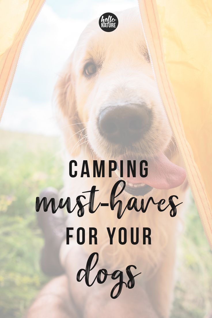 Must-Have Camping Essentials for Dogs - Hello Nature