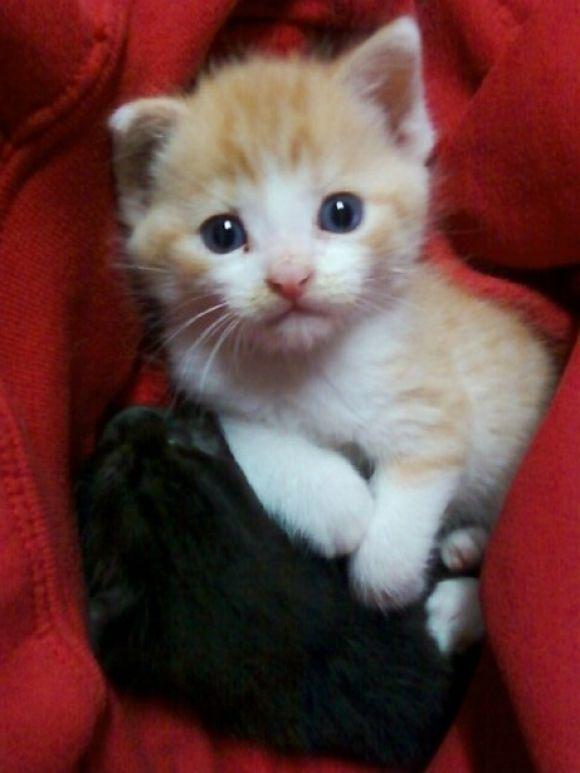 Cuddly Kitties | Cutest Paw
