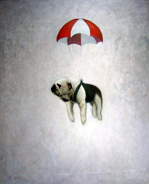Parachute Bulldog #walterthefrenchbulldog