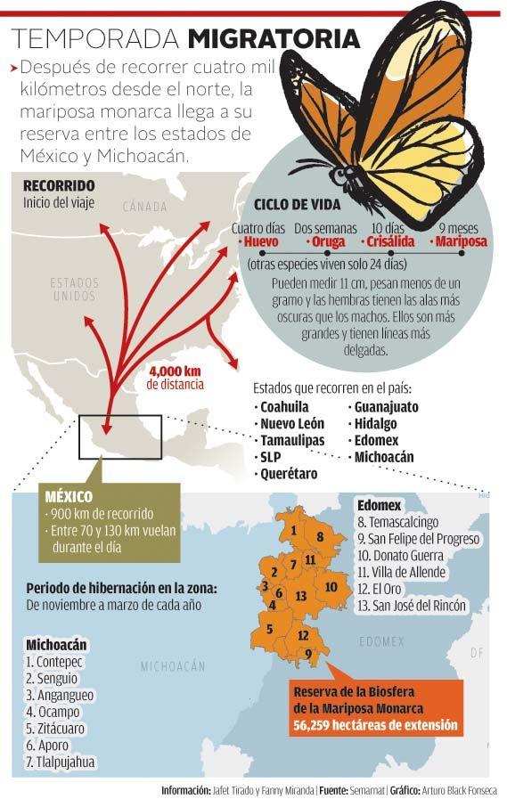 Alistan corredor ecológico para proteger a la mariposa Monarca ...