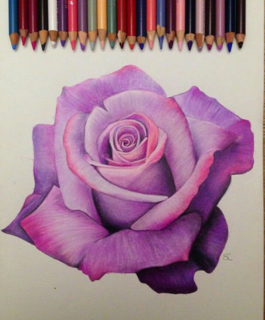 Another Great Rose Color Pencil Art Pencil Art Colorful Art
