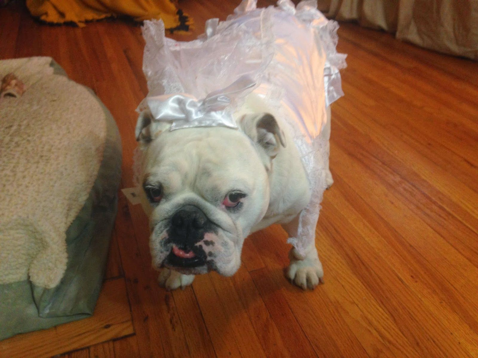 The Bulldog Brigade: I'm Not Intentionally Abusing Them...