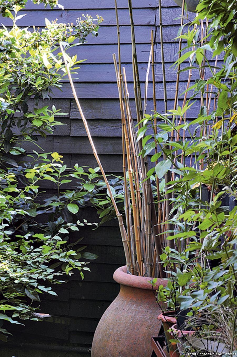 Un jardin boudoir en ville boudoir cannes et ranger - Jardin de bambou cannes ...