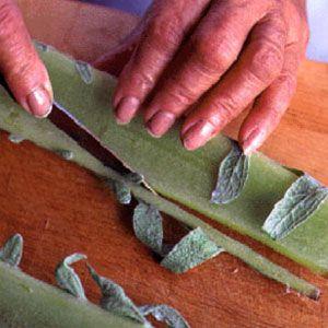 Preparing Cardoon; Cynara cardunculus; 地中海薊