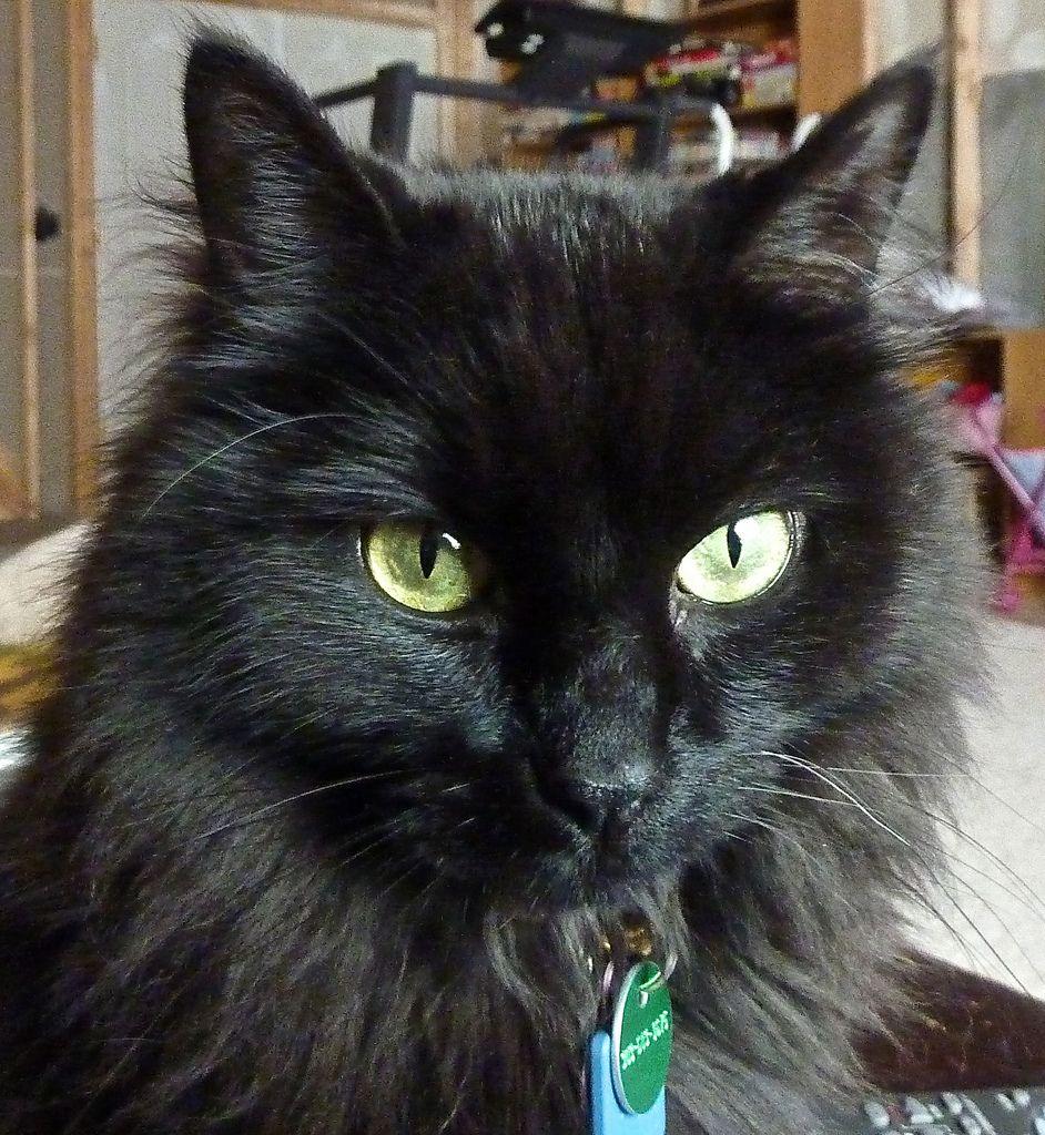 The Eyes Have It Grey Tabby Cats Tabby Cat Tabby Cat Names