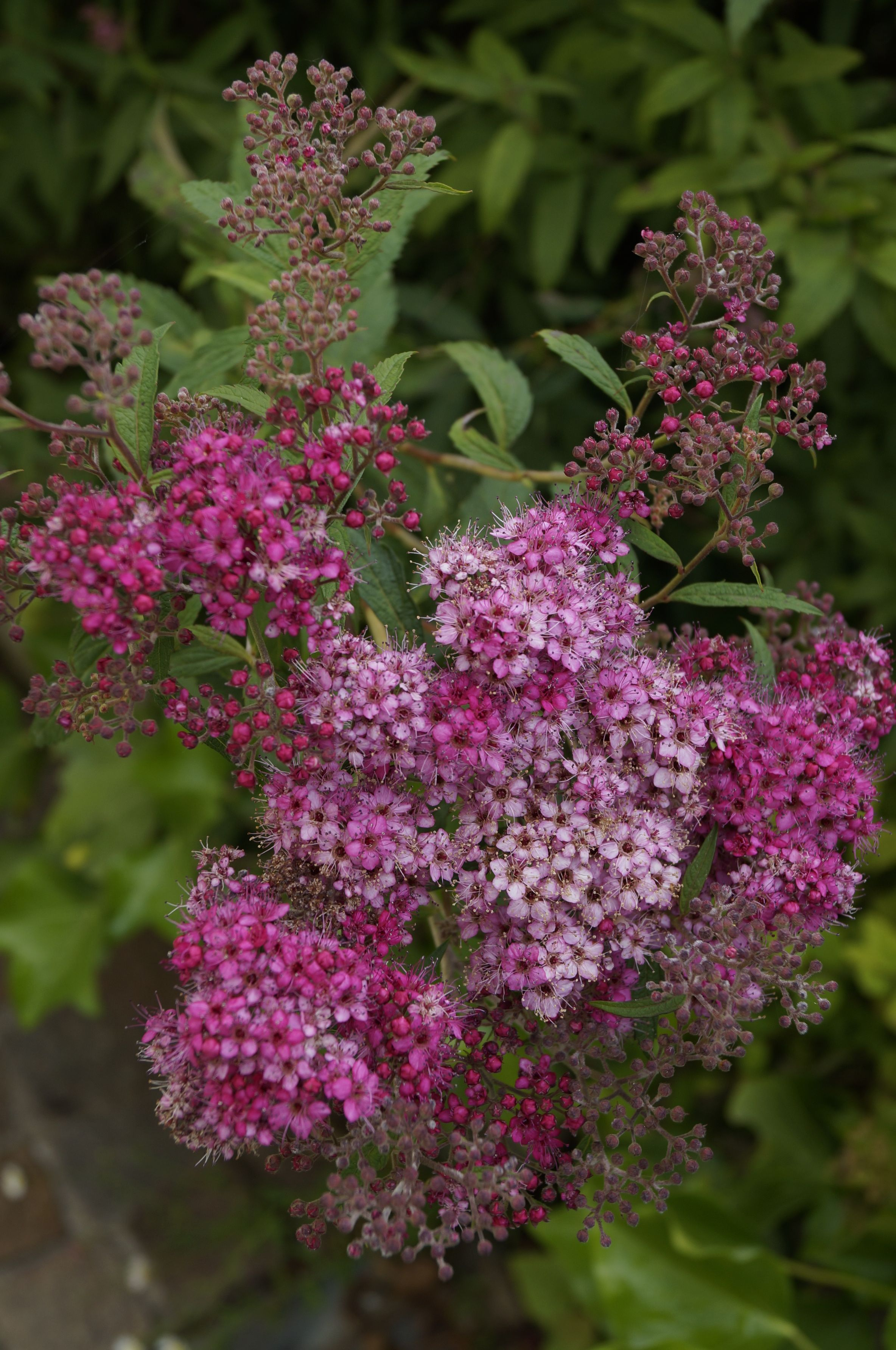 Pin Von Minou Auf Welcome To Casa Minou Garten