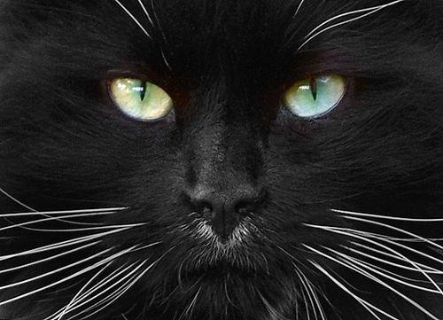 Cat Eyes by disneymike, via Flickr