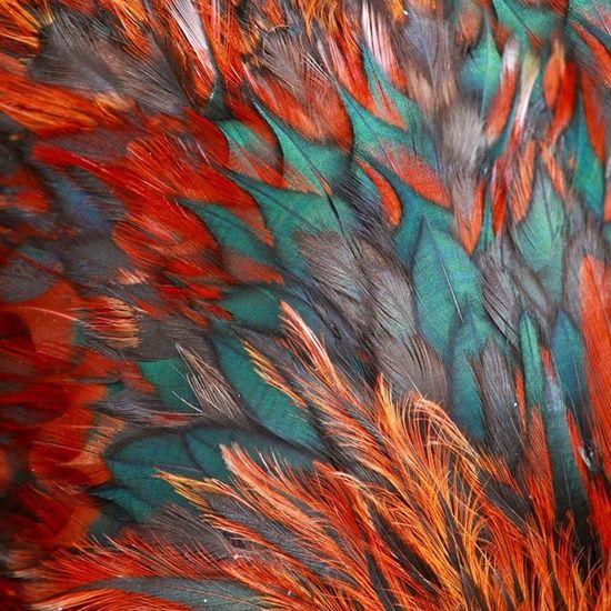 teal and orange feathers
