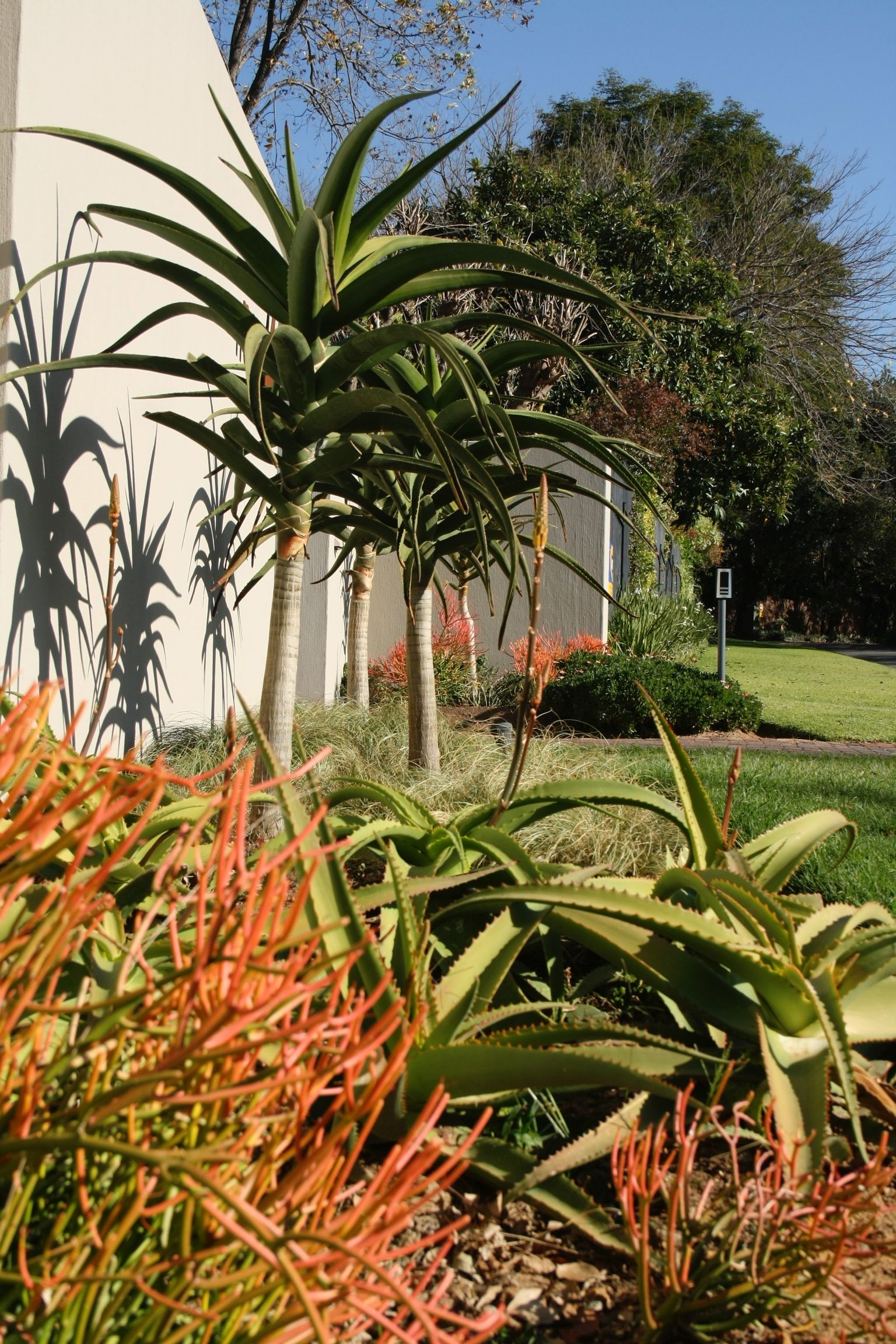 Water wise indigenous south african garden westhouse for Garden designs in south africa