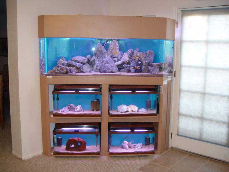 Multiple Fish Tank Stand Display