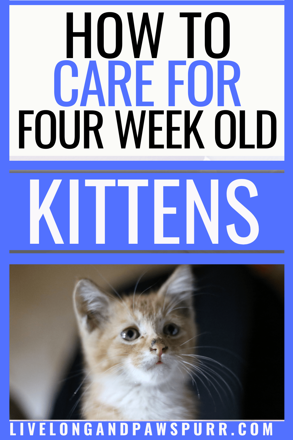 The Simple Guide To Caring For Four Week Old Kittens Live Long And Pawspurr In 2020 Kitten Care Newborn Kittens Pet Care Cats