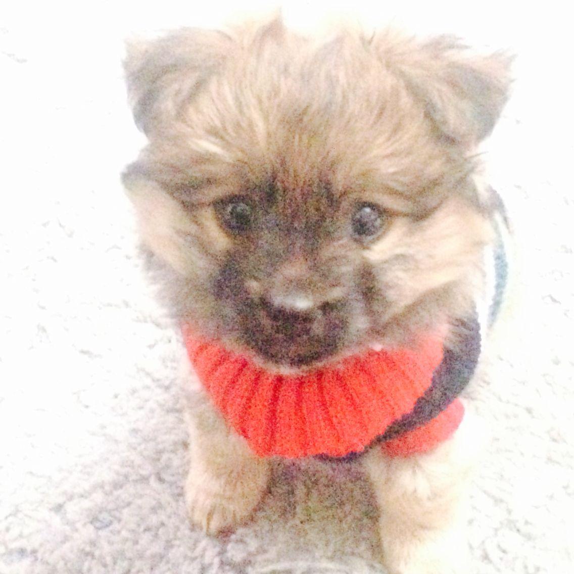 Koda in his sweater