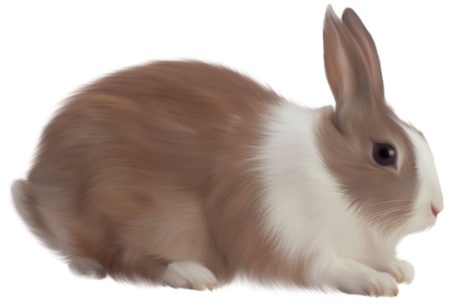 brown rabbit free clipart rabbit png rabbit clipart free rabbits rabbit pictures  [ 1500 x 993 Pixel ]