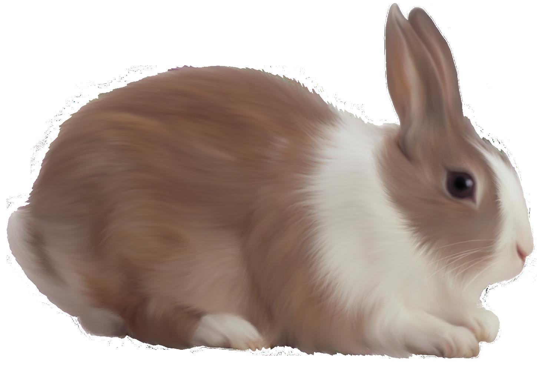 Brown Rabbit Free Clipart Rabbit Pictures Beautiful Rabbit Cute Animal Videos