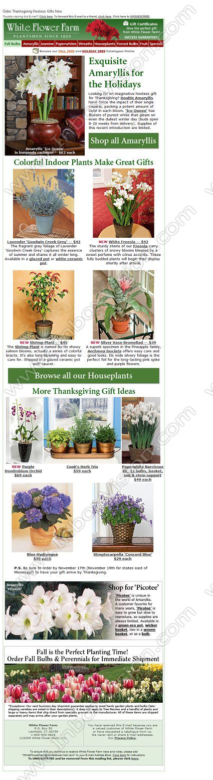 Company White Flower Farm Inc Subject Email Design