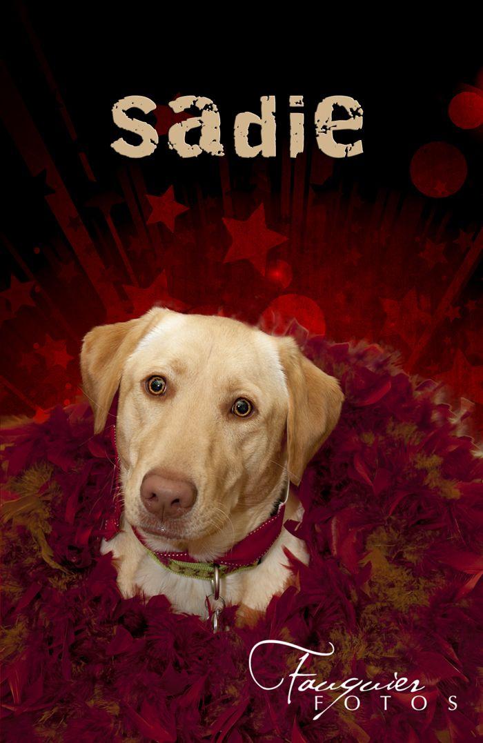 Fauquier Fotos   Warrenton, VA   Posts, Dog portrait, Christmas, red wreath