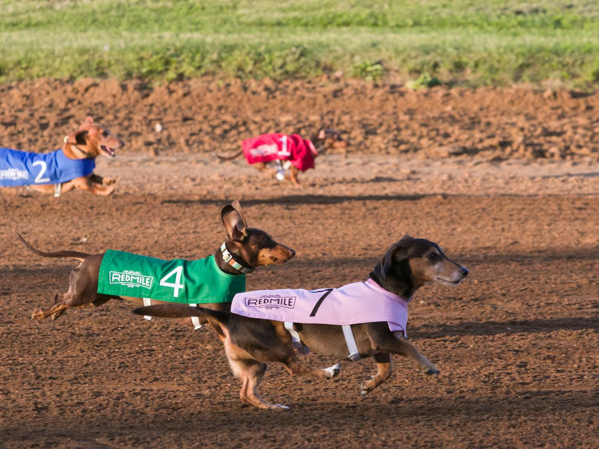 The 4th Annual Wiener Dog Races Take Place in Lexington