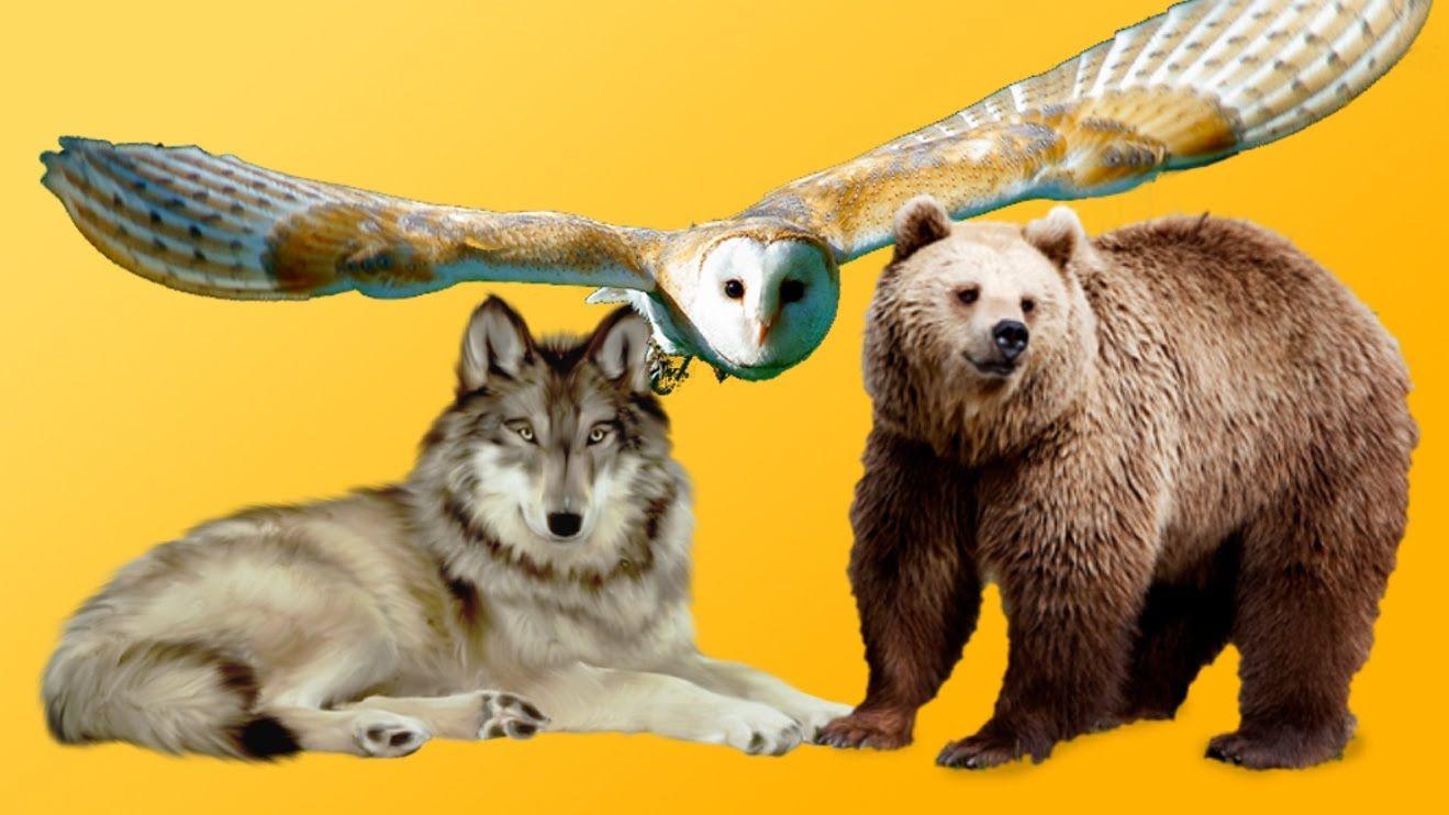 Hayvanlarla İlgili OHA Diyeceğiniz 74 İlginç Bilgi: Merhaba, sizler için sitemize eklenen… #İlginç #hayvanlarlailgiliilginçbilgilerresimli