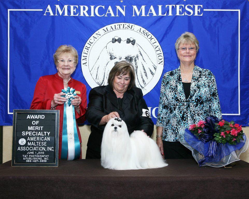 Akc Champion Richelieu S Valentino The Judges Award Of Merit 2012