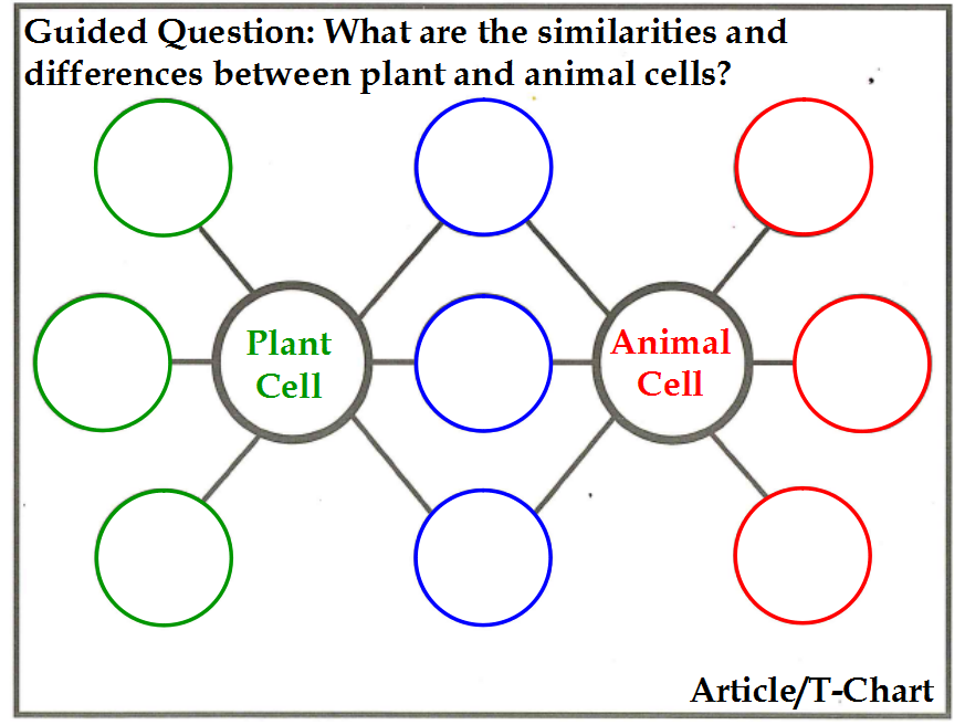 plant and animal cells not labeled Google Search Plant