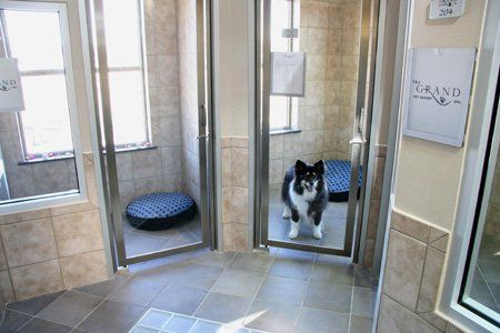 Photo Gallery Veterinary Housing Solutions To Show Cats And Dogs The Love With Images Dog Boarding Facility Pet Resort Pet Boarding