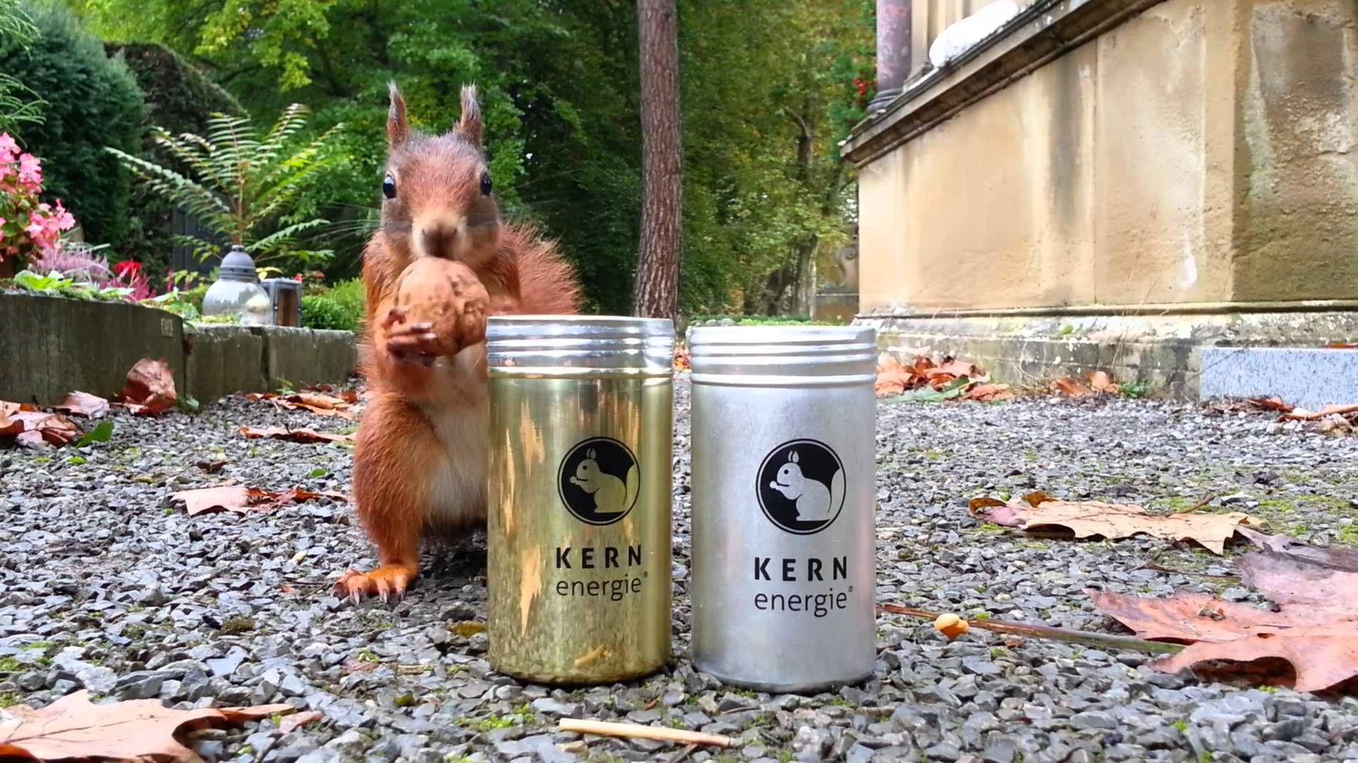 Kernenergie Eichhornchen Squirrel Silberdose Walnut