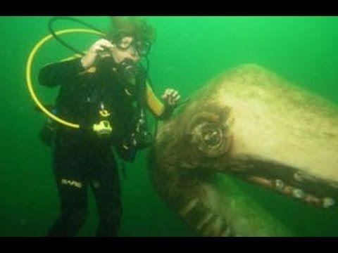 The Ogopogo Monster - Sea Serpent (REAL EVIDENCE ...