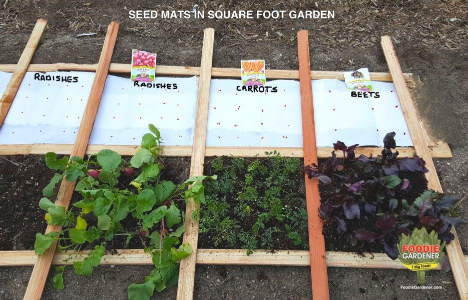 DIY SEED MATS for square foot vegetable gardens. Plan your garden in advance and make seed mats so all you have to do is place them on the ground, cover with soil and let it grow! Space and time saver. FoodieGardener.com