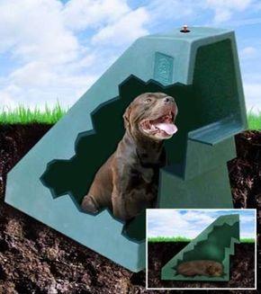 Bird Dog Pictures Of Properties Llc