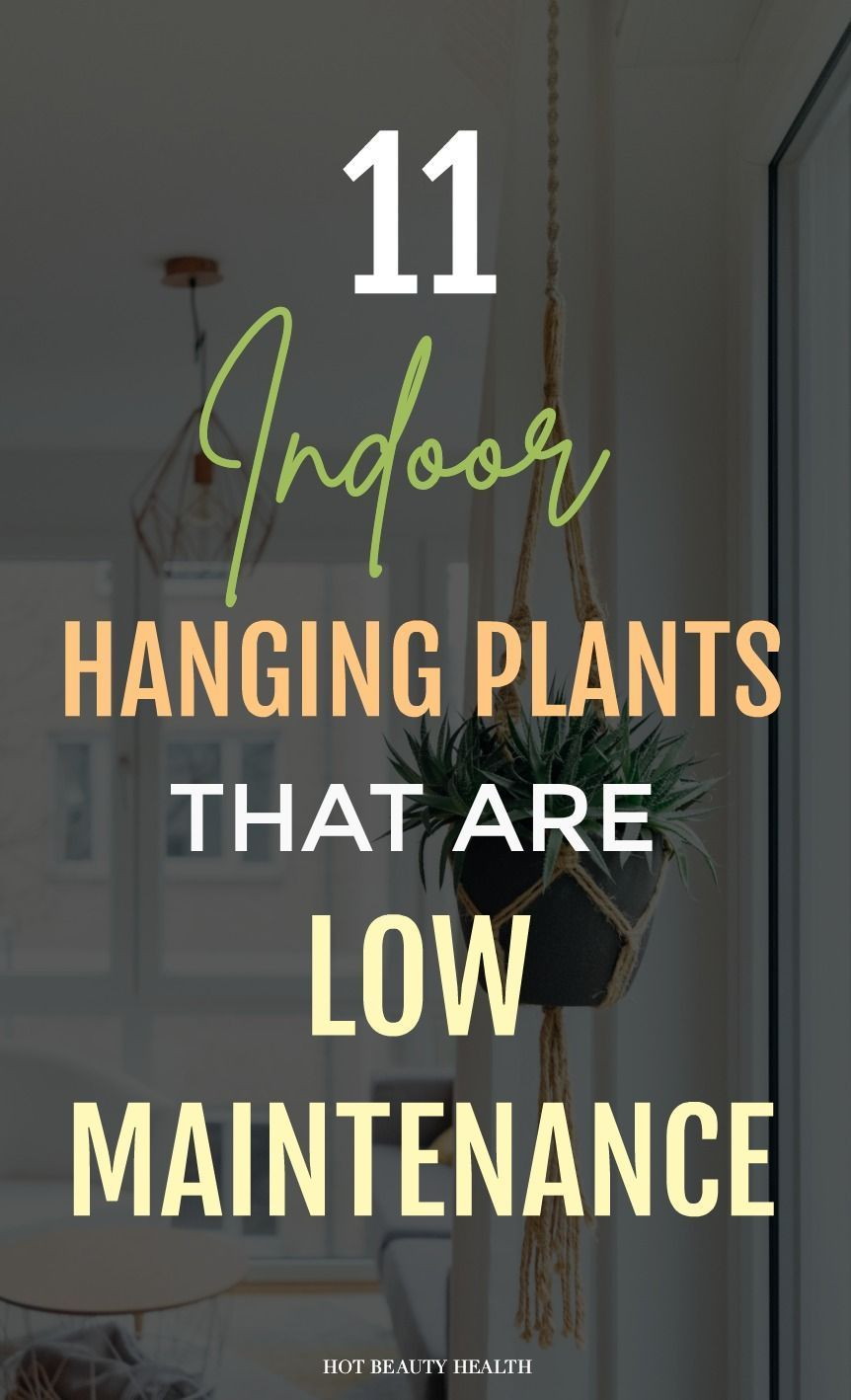 Indoor Hanging Plants To Green Up Your Home These 11 low maintenance hanging plants adds beautiful greenery to the home! I like to place them inside my bedroom and kitchen near the window. If you're looking for plants that hang well, you're going to love these!These 11 low maintenance hanging plants adds beautiful greenery to t...