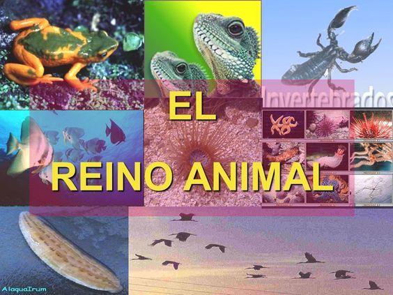 El Reino Animal Descripción En Drive Reino Animal Reino De Los Hongos Experimentos