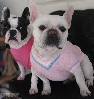 Two French Bulldogs: Wear Pink..