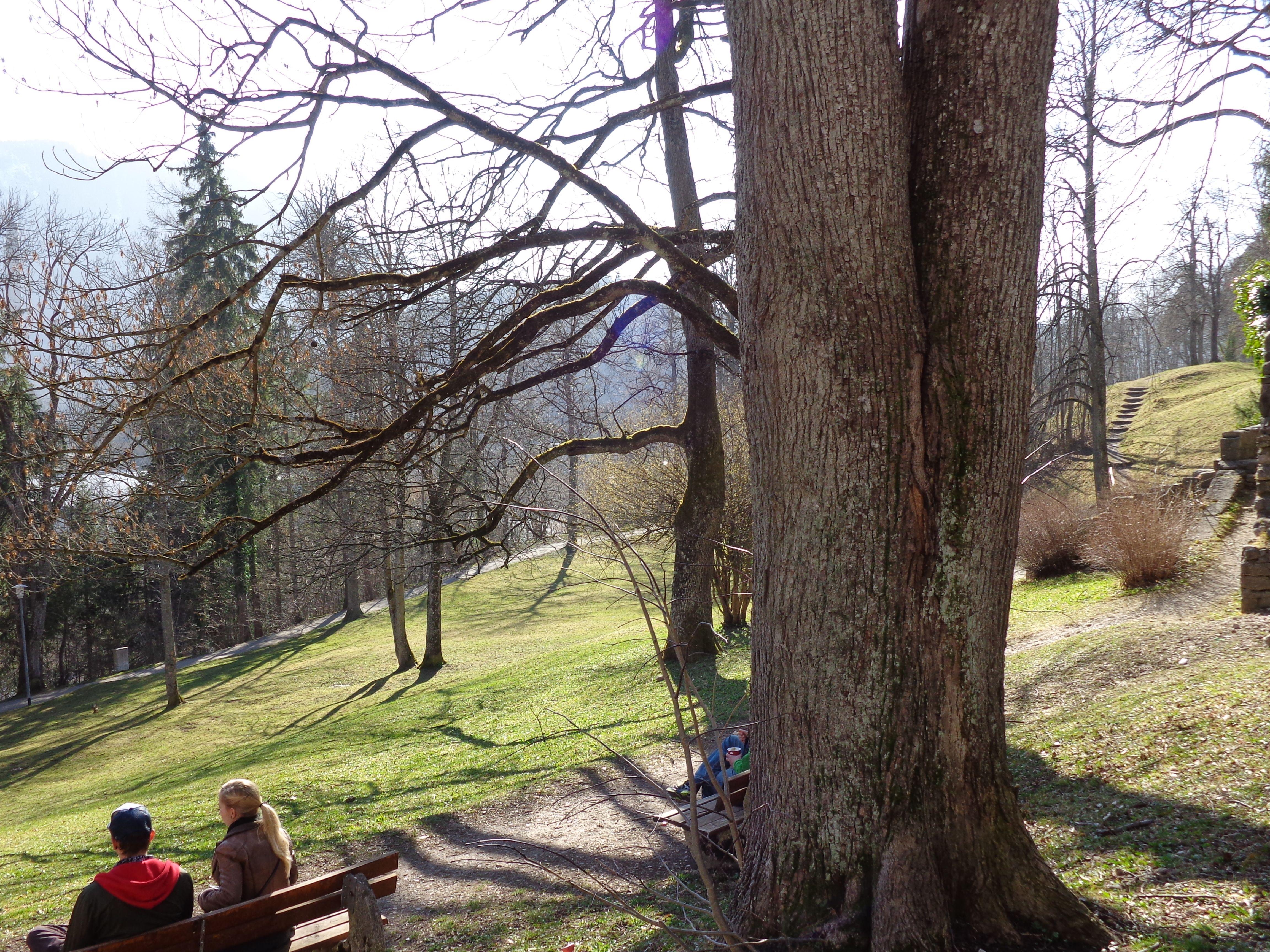 Schlosspark Füssen-März 2014