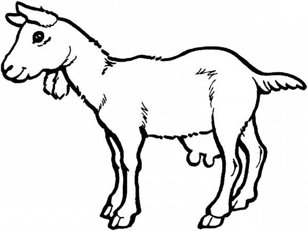 Drawing Goat Coloring Pages