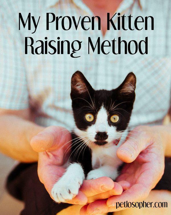 Taking Care Of A Kitten The Master Kitten Raising Guide Cat Training Raising Kittens Cat Care
