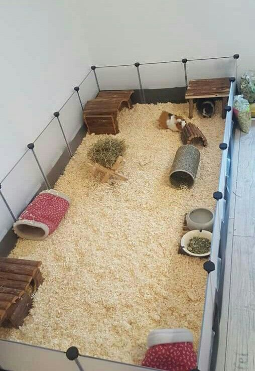 Klatka dla winki morskiej pinterest jaula cobaya animales mascotas - Juguetes caseros para conejos ...