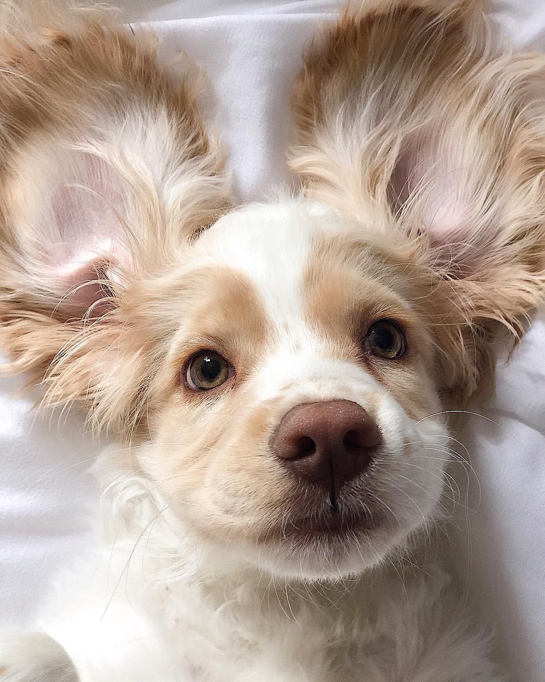 Dog Or Human We Re Having A Hard Time Deciding Cute Adorable