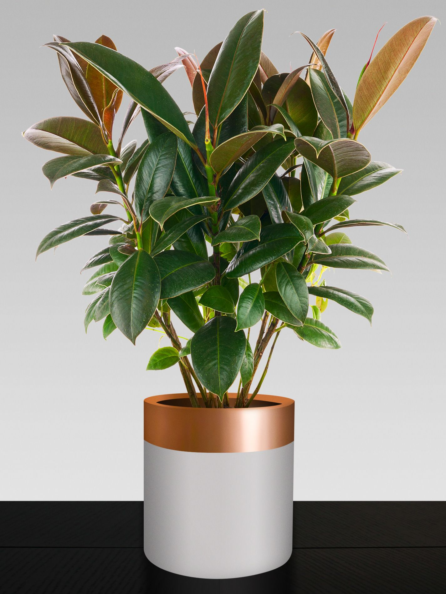 These modern lightweight cylinder shaped fibreglass pots are uniquely designed and custom painted, perfect for indoor or outdoor use. All pots are finished in a gloss UV resistant clear coat, which will protect them from the harsh outdoor elements.