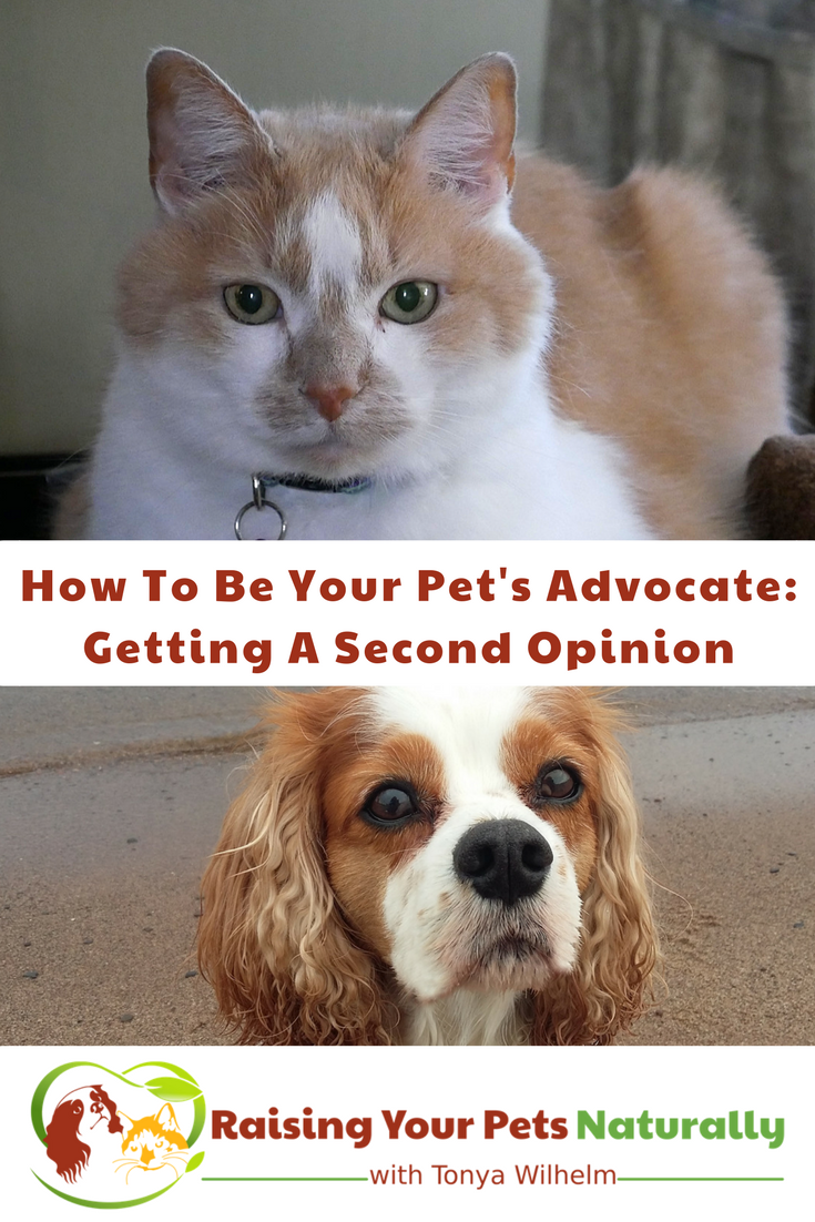 How To Be Your Pet s Advocate Getting A Second Opinion For Your