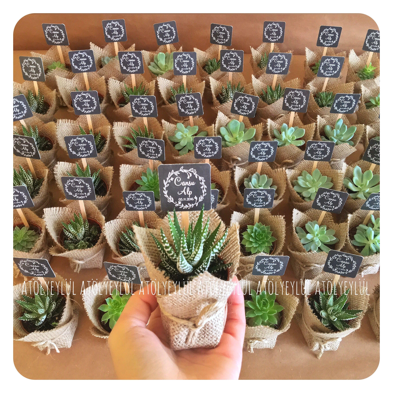 safari decorations for living room house plans with large rooms mini sukulent, succulent, kaktüs, cactus, wedding ...