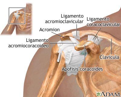 Ligamentos del hombro. | El cuerpo humano | Pinterest | El cuerpo ...