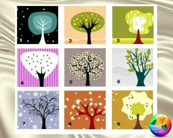 Разновидности домашних деревьев фото предлагает