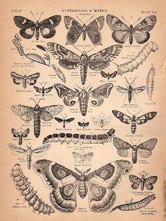 Free Graphics: Butterflies & Moths